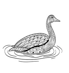 swan swims on the water coloring for adults vector image