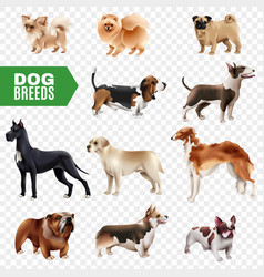 dog breeds transparent icon set vector image