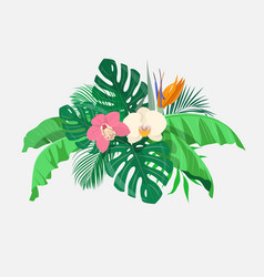 composition tropical leaves and exotic flowers vector image