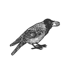 crow and nut sketch vector image