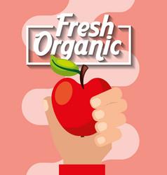 hand holding fresh organic fruit apple vector image