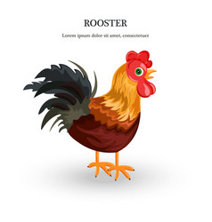 Rooster detailed colorful vector