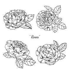 rose flower and leaf hand drawn botanical vector image