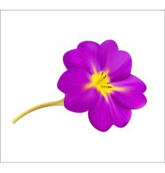 Violet spring flower vector