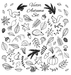Hand drawn set of autumn leaves animals acorns vector