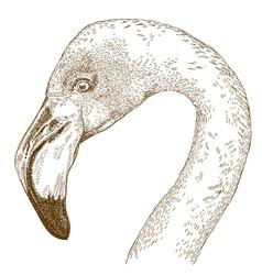 engraving flamingo vector image