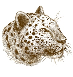 engraving leopard head vector image vector image