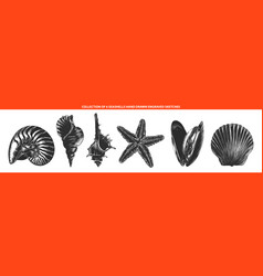 engraved style seashells and mollusk collection vector image
