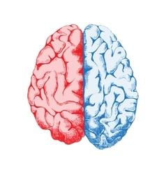 Hand drawn human brain vector image
