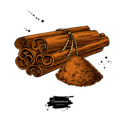 Cinnamon stick tied bunch and powder vector