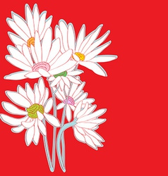 daisies red card vector image