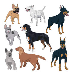 Standing dogs collection isolated on white vector