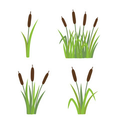a set reeds in grass isolated on white vector image