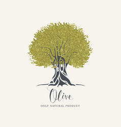 banner with olive tree and olive oil labeled vector image