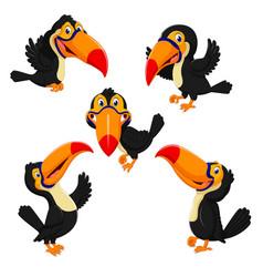 beautiful collection of orange beak toucan vector image