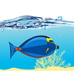 blue coral fish vector image