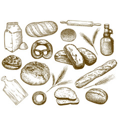 hand drawn bakery freshly baked bread wheat ears vector image