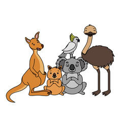 kangaroo koala wombat cockatoo and emu vector image