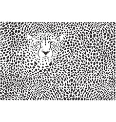 background cheetah skins and head vector image