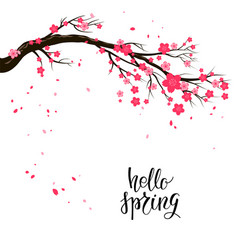 cartoon cherry or sakura blossom branch vector image