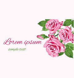 greeting card with pink roses place for text vector image