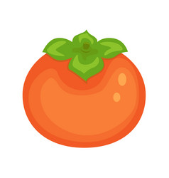 orange persimmon isolated on vector image