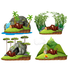 Orangutan in four different scene vector