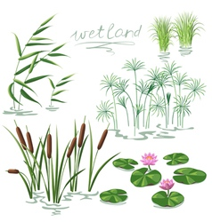Wetland plant color vector