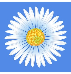 Chamomile flower vector image vector image