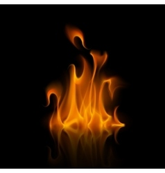 Orange Fire Flame Bonfire Isolated on Background vector image vector image