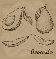 Hand drawn avocado set whole avocado sliced vector