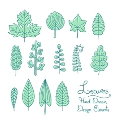 Set of leaves in cartoon style vector