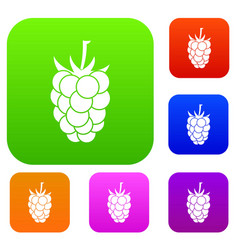 blackberry fruit set color collection vector image