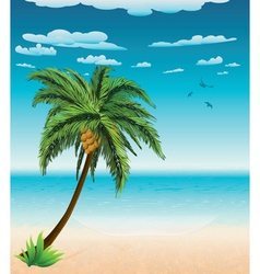Summer beach and palm vector image vector image