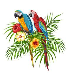 Macaw parrots vector