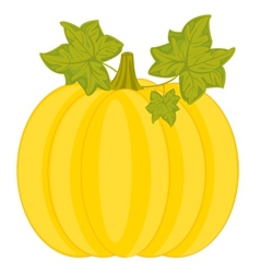Ripe pumpkin vector
