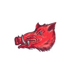Wild Boar Razorback Head Side Drawing vector image