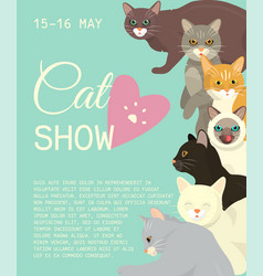 Cats show invitation card grooming or veterinary vector