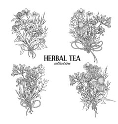 Four bouquets composed medicinal herbs and vector