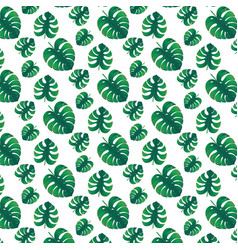 Green monstera leaves vector
