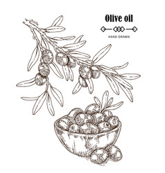 hand drawn olive branch in sketch style vector image