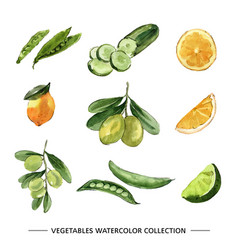 Set various isolated vegetable watercolor vector