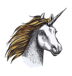 Unicorn horse with horn and golden mane sketch vector