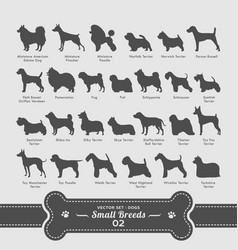 dog set - small breeds collection vector image