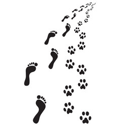 footprints of feet and paws vector image