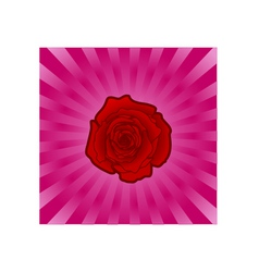 rose backround vector image