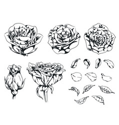 silhouette rose handdrawn flower floral monochrome vector image