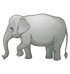 Asian elephant vector