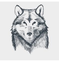 Wolf head grunge hand drawn sketch vector image