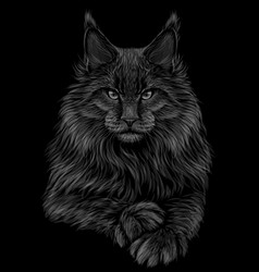 Cat graphic artistic hand-drawn vector